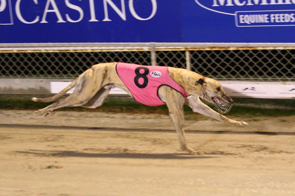 Greyhounds Review – Tuesday, 27 October